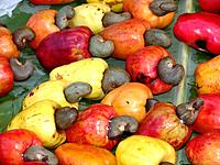 some acshew nuts tipical northeast fruit