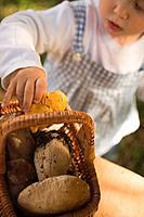 Small girl putting fresh chanterelles into basket