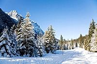 Germany, Bavaria, Winter scenery in the background Wetterstein mountains