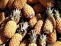 lots of pineapples fruits for sale