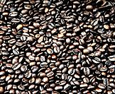 toasted coffee grains beans crop
