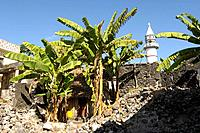 Indian Ocean, Comoros, Anjouan island, town, Domoni, Mosque, islamic, islam, minaret, banana trees, wall, backyard, co