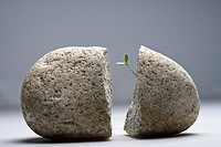 Sprout growing in stone