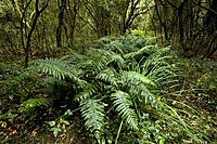 Ferns at El Rey National Park, Argentina