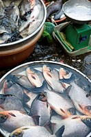 Fish for sale in market in Vinh Long, Vietnam