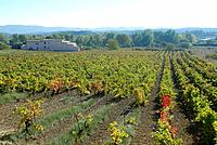 Vineyards, Trèbes. Aude, Languedoc-Roussillon, France