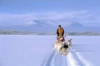 huskies _ pulling sledge