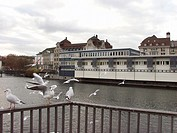 River, Birds, Zurich, Swiss