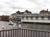 River, Birds, Zurich, Swiss