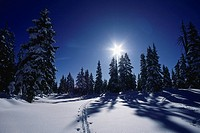 Cross Country ski trail, Hollyburn, Cypress Mountain, BC