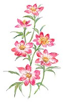 Hand drawn illustration of pink wild flowers