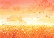 Geese migrating in the autumn over a wheat field