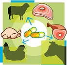Montage illustration about antibiotics in meat containing pills, meat products, and livestock