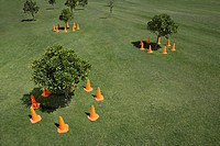 Traffic cones surrounding small trees