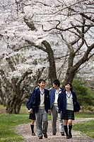 High School Students Walking on Path with Cherry Trees in the Background