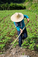 Farmer working in a field, Emerald Valley, Huangshan, Anhui Province, China