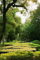 Trees and plants in a formal garden, Shamian Island, Guangzhou, Guangdong Province, China