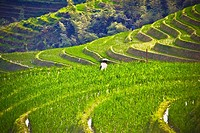 High angle view of terraced fields, Jinkeng Terraced Field, Guangxi Province, China