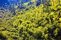 High angle view of trees in a forest, Xidi, Anhui Province, China