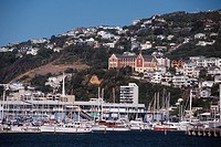 New Zealand _ North Island _ Wellington_Yacht harbor / Mt Victoria