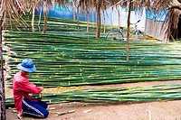 Vietnam _ The South _ The Delta of Mekong _ Rach Gia Region _ Bamboo