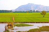 Vietnam _ The South _ The Delta of Mekong _ Chau Doc Surroundings _ Tinh Bien Region
