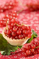 Fresh redcurrants in tart shell