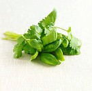 Bunch of basil and coriander