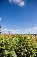 Corn field and windmills (thumbnail)