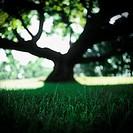 Silhouette of a tree in a grassy field