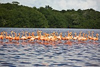 Flock of Ria De Celestun birds in water, Yucatan, Mexico