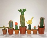 different grafted cacti
