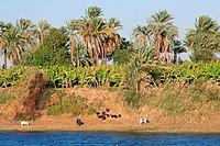 Egypt: Nile landscape