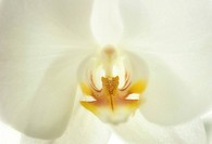 Close up of an orchid