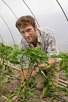 Man by bell pepper plants in greenhouse, portrait