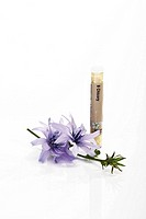 Tube with Bach Flower Stock Remedy, Chicory Cichorium intybus (thumbnail)