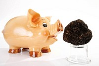 Piggy bank and Black Truffle, close up