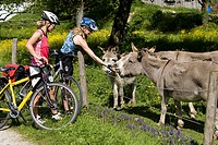 Germany, Bavaria, Oberland, Two women with mountain bikes feeding donkeys