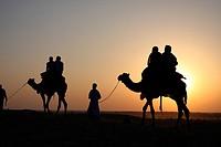Camel safari, Jaisalmer, India