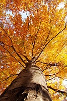 tree from below in autumn