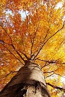 tree from below in autumn