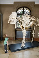 Boy looking at an elephant skeleton (thumbnail)