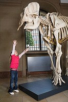 Girl reaching for an elephant skeleton
