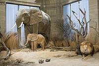 Wild animals in a museum exhibit