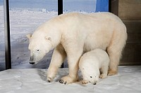 Stuffed polar bear and cub