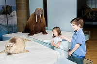 Children looking at a stuffed seal