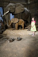 Girl standing beside stuffed elephants in a museum