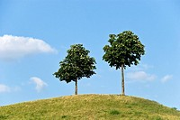 Bäume auf dem Hügel