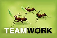 Team work 02