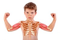 6_year_old boy : rib cage and arms with biceps and brachial triceps.